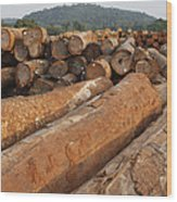 Logged Timber From The Tropical Wood Print