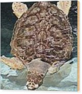 Loggerhead Sea Turtle Wood Print