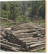 Logs In Logging Area, Danum Valley Wood Print