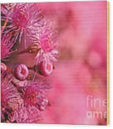 Lollypop Gum Tree Blossoms Wood Print