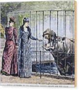 London Zoo, 1891 Wood Print