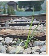 Lone Blade Of Grass On Railtracks Wood Print