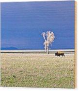 Lone Buffalo 3 Wood Print