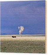 Lone Buffalo 4 Wood Print
