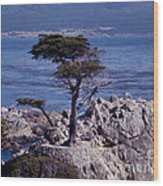 Lone Cypress By The Sea Wood Print