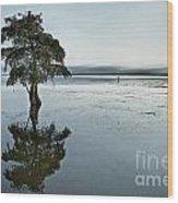 Lone Cypress Tree In Water.  Wood Print