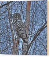 Lone Gray Owl Wood Print