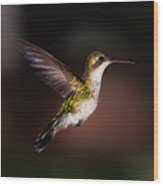 Lone Hummingbird Wood Print