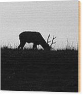 Lone Male Grazing On Top Of Hill. Wood Print