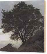 Lone Oak 2 Wood Print