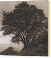 Lone Oak 2 Sepia Wood Print