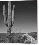 Lone Saguaro Wood Print