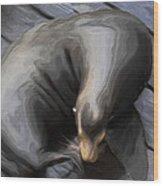 Lone Sea Lion Wood Print by Jack Zulli