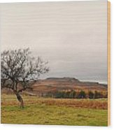 Lone Tree And Higger Tor Wood Print by Siobhan Brennan-Raymond