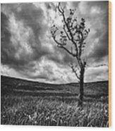 Lone Tree On The Ayrshire Moors Wood Print