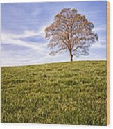 Lone Tree On The Hill Colour Wood Print
