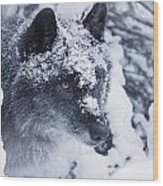Lone Wolf In Snow Wood Print