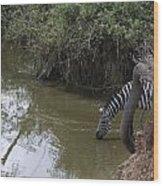 Lone Zebra At The Drinking Hole Wood Print