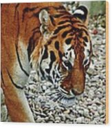 Lonely Tiger Wood Print