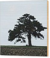 Lonely Tree #1 Wood Print