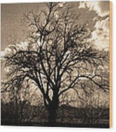 Lonely Tree At Sunset Wood Print by Sergio Aguayo