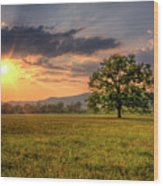 Lonely Tree In Field Wood Print