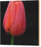 Lonely Tulip Wood Print