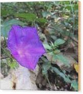 Lonely Violet Wood Print