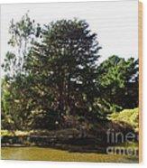 Lonelytree  Wood Print