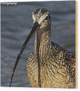 Long-billed Curlew Portrait Wood Print