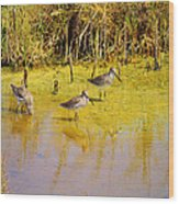 Long Billed Dowitchers Migrating Wood Print