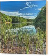 Long Branch Lake Marsh Wood Print by Adam Jewell