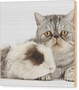 Long-haired Guinea Pig And Silver Tabby Wood Print