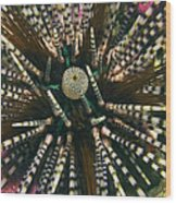 Long Spined Sea Urchin Wood Print