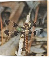 Long Tailed Skimmer 8695 3318 Wood Print