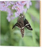 Long Tailed Skipper - Urbanus Proteus Wood Print