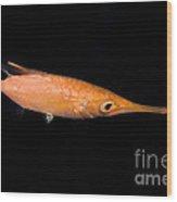 Longfin Snipefish Wood Print