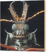 Longhorn Beetle Macrodontia Cervicornis Wood Print