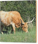 Longhorn Cow Wood Print