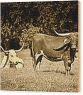 Longhorn Cows Rsting In Monochrome Wood Print