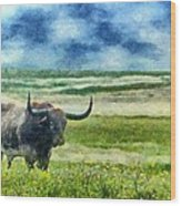 Longhorn Prarie Wood Print by Jeff Kolker