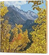 Long's Peak And The Keyboard Of The Winds Amidst Aspen Gold Wood Print by Margaret Bobb
