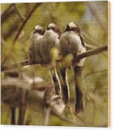 Longtailed Tit Fledglings Wood Print