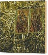 Look And Seek Wood Print
