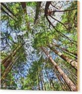 Look To The Sky Wood Print