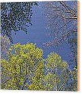 Looking Up In Spring Wood Print