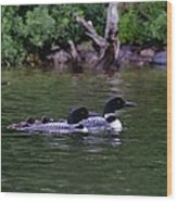Loons With Twins 2 Wood Print
