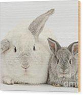 Lop Rabbits Wood Print