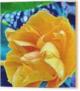 Lost In Garden Wood Print