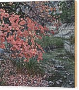 Lost Maples Fall Afternoon Wood Print